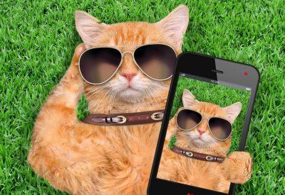 Kat teruggevonden via Tinder