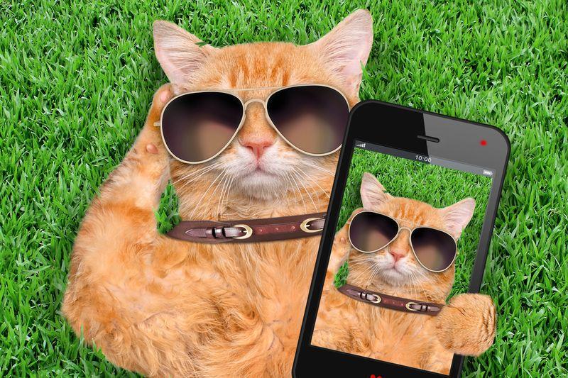 Vrouw vindt kat terug via dating-app Tinder