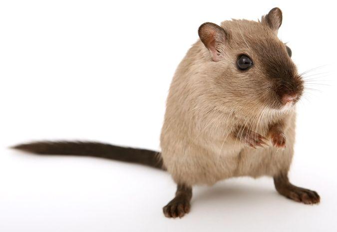 Help, muizen! Tips tegen een mega muizenprobleem