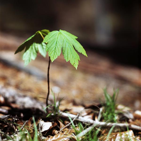 TreeClicks - plant bomen terwijl je shopt