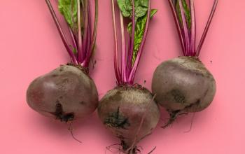 Duurzaam eten met minder mooie groenten
