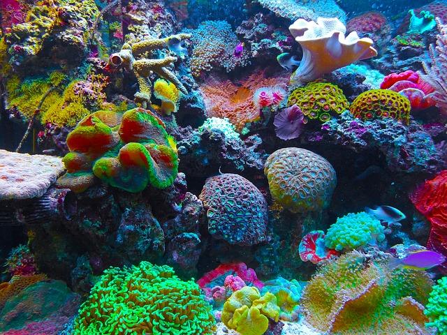 Vreemdste souvenirs koraal rif