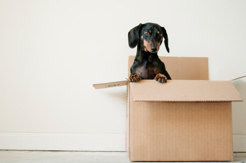 Verhuizen checklist – 5 tips voor je oude én nieuwe woning