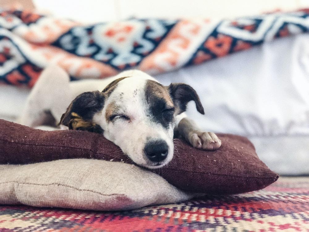 De zoektocht naar de perfecte hondenmand