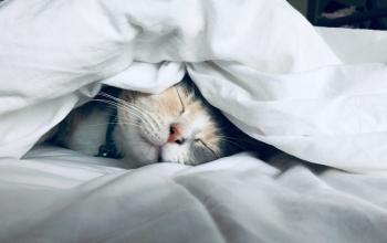 Welk matras past bij jouw slaaphouding